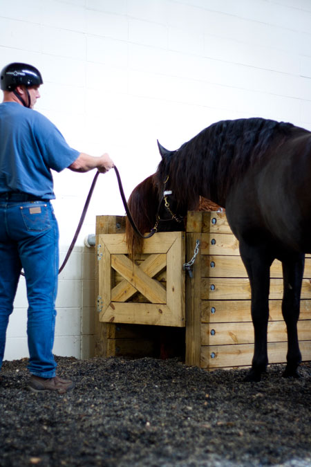 Stallion Reproduction
