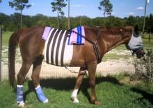 Ruby at home three weeks post-op wearing the CM™ Heal Hernia Belt
