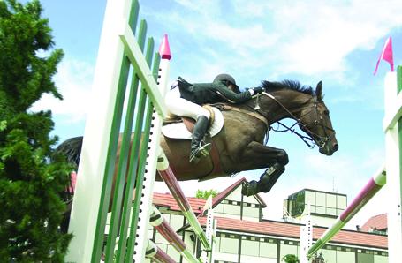 Equine Regenerative Medicine at UF